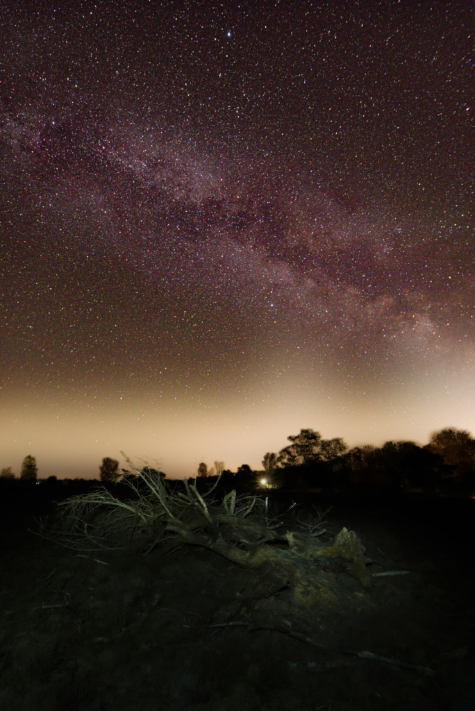 The dead tree and the milkyway